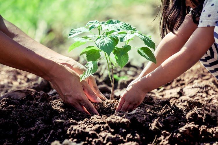 Continuer à planter des arbres : est-ce vraiment utile ?